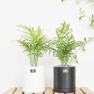 공간별 실내공기정화식물 관엽식물화분 미세먼지제거