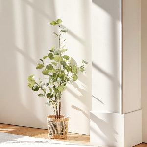 [룸앤홈] 조화나무/알로카시아/몬스테라 외 인조나무 조화 나무