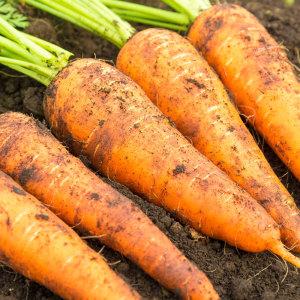 유기농 제주 흙당근 3kg