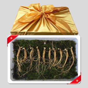 (한수위) 토종 산양산삼 5년근 12뿌리 선물세트
