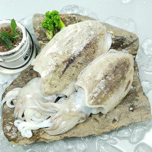 산지직송  갑오징어 미니1kg(25미/급냉) 라면용추천