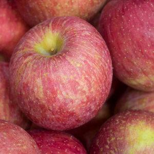 제철과일 햇 사과 가정용사과4kg소과24과내외