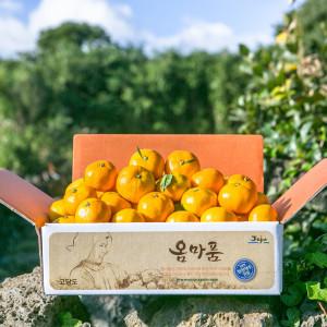 꿀당도 타이벡감귤 10kg로얄과(S-M과)