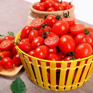 [15%] 정품 방울토마토 5KG/중소과