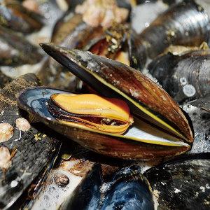 (15%쿠폰) 남해 다듬이 홍합 5kg