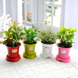 초보자도 키우기 쉬운 공기정화식물+화분세트