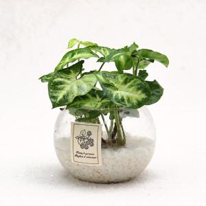 가꾸지오 공기정화식물 수경식물세트 19종 택1