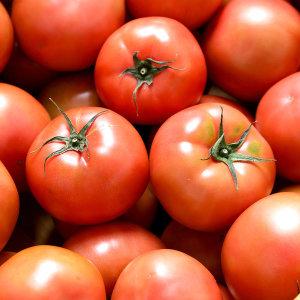 [장터할매] 정품 완숙토마토 찰토마토 5kg 4-5번 / 한정수량특가