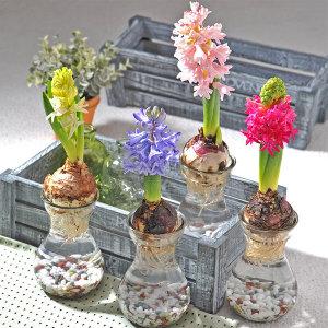 초보자도 키우기 쉬운 수경재배 공기정화식물 diy세트