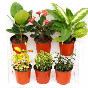 아침향기 공기정화식물 특가할인 120종 관엽 꽃 화분