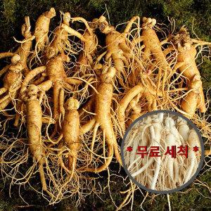 충남금산 인삼 수삼  바로수확한 난발삼400g10뿌리내외