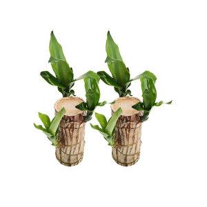 공기정화식물/꽃/허브 균일가  1+1
