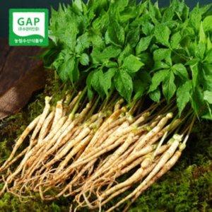 새싹삼사랑터 20cm이상 50뿌리