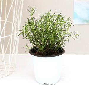 미세먼지 공기정화식물 중형대형화분 아레카야자